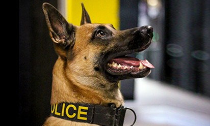 A profile of Nitro the EMU Police K-9 officer,