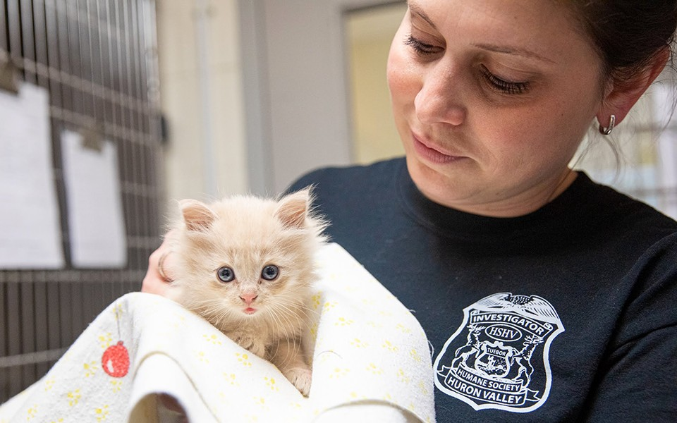 Beasley the kitten with HSHV officer